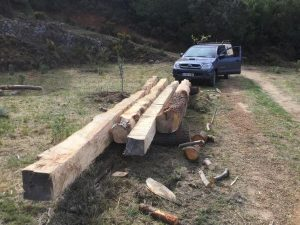 trees worked after being cut down