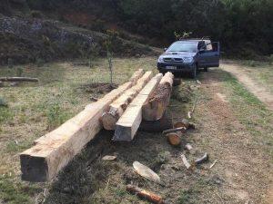 arboles trabajados después de ser cortados