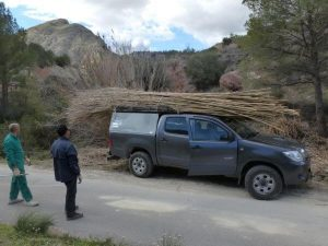 car loaded with reeds