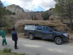 coche cargado de cañas